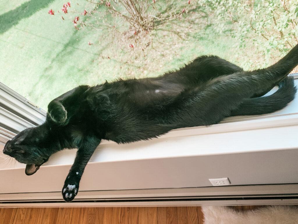 cat naps in windowsill